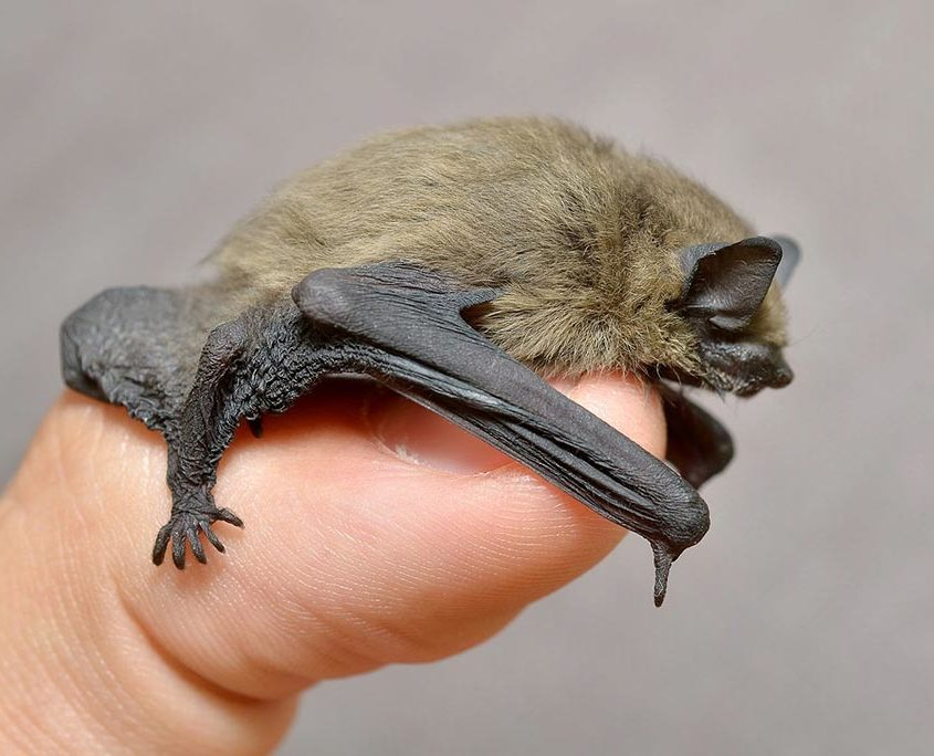 Bats Are Small