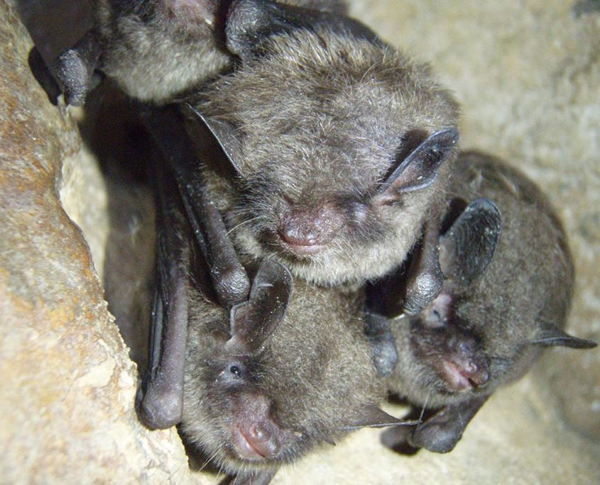 Bats Sleeping Upside Down